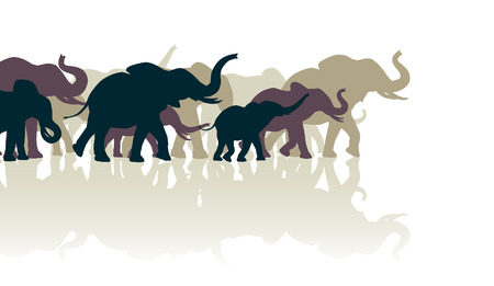 elephant trunk: Editable vector illustration of an elephant herd with reflections Illustration