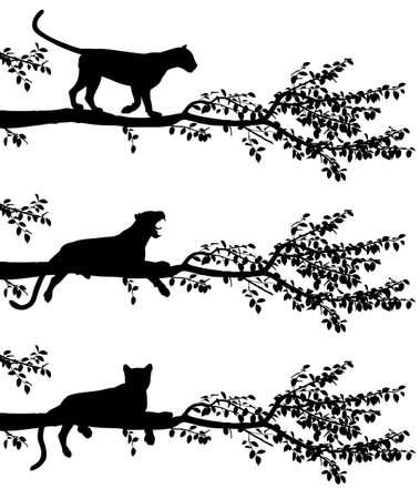 Conjunto de tres siluetas vectoriales editables de un leopardo en una rama de árbol con leopardos como objetos separados