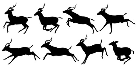 herbivore: Set of editable vector silhouettes of running impala antelopes