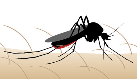 sucking: Editable illustration of a mosquito sucking blood from human skin