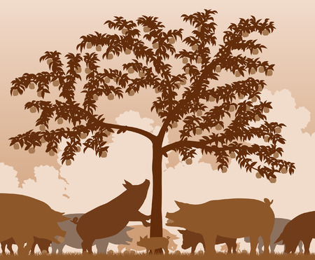 home grown: Editable vector illustration of free-range pigs feeding under an apple tree with all figures as separate objects