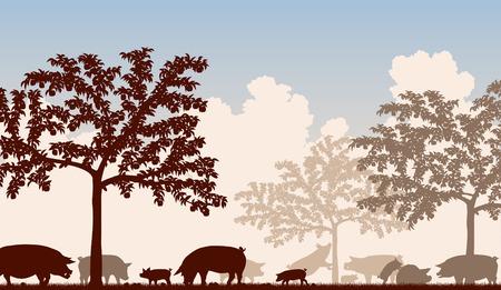 arbres fruitier: Modifiable illustration vectorielle de porcs en plein air d'alimentation sous les arbres fruitiers avec tous les chiffres comme des objets distincts