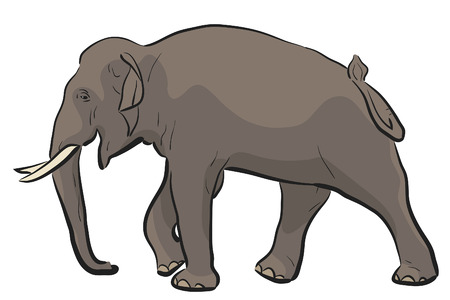 striding: illustration of a walking Asian elephant