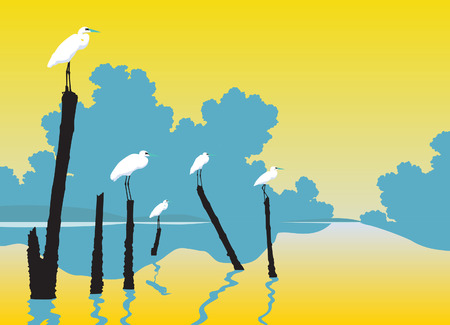 sea bird: Editable vector illustration of white egrets perched on poles in a lake
