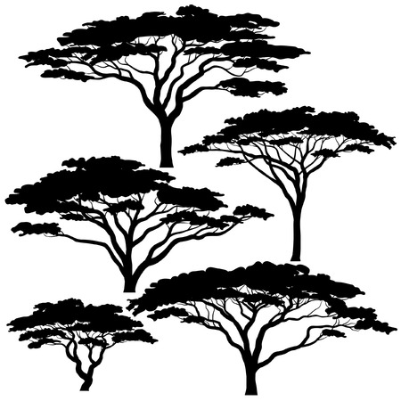 acacia tree: Set of eps8 editable vector silhouettes of acacia trees