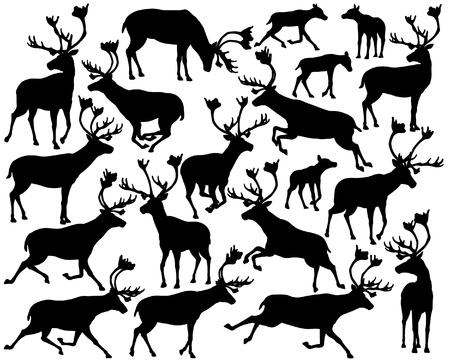 herd: Set of eps8 editable vector silhouettes of reindeer or caribou standing, walking, running and leaping
