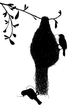 nido de pajaros: EPS8 silueta vectorial editable de un par de tejedores construyen su nido de hierba con las aves como objetos separados Vectores