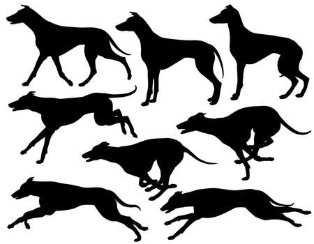 dog run: Set  editable vector silhouettes of greyhound dogs running, standing and trotting