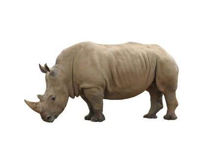 poach: Rhinoceros isolated on white background