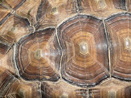 Patterns on Tortoise Shell photo