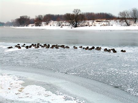 Moskova river winter view photo