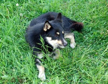 usual: A generic dog on grass