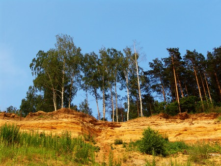 Yellow sand cliffs with trees on top photo