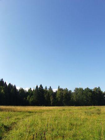 적합: A plain summer forest view suitable for backgrounds 스톡 콘텐츠