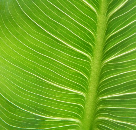 Green leaves background Stock Photo - 1066648
