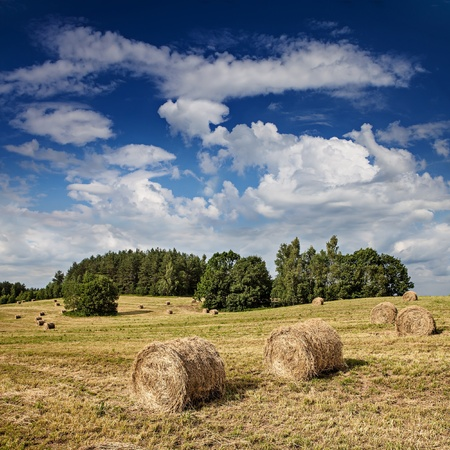 Big hay rolls on a beautiful field  Stock Photo