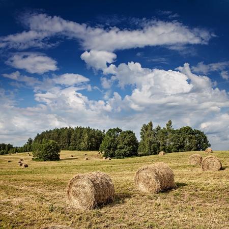 hay: Big hay rolls on a beautiful field  Stock Photo