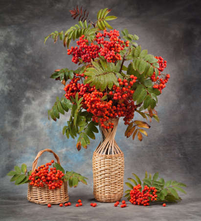 fascicle: Autumn still life.Rowan branches in a vase and basket Stock Photo