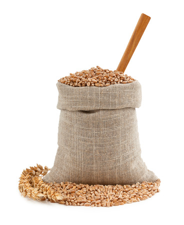 jute: Wheat and ears isolated on white background