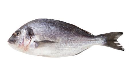 daurade: Fresh dorado fish isolated on white background
