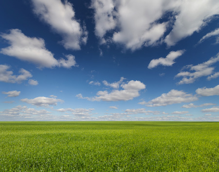 grass and sky: green grass field and bright blue sky. Stock Photo