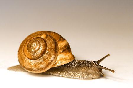 feeler: Snail