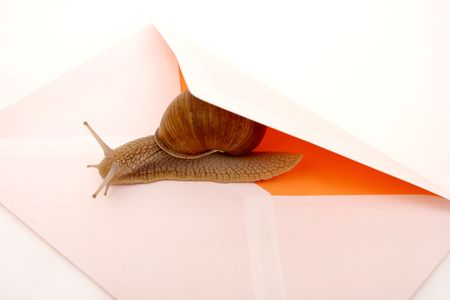 messa: Snail and mail envelope closeup Stock Photo