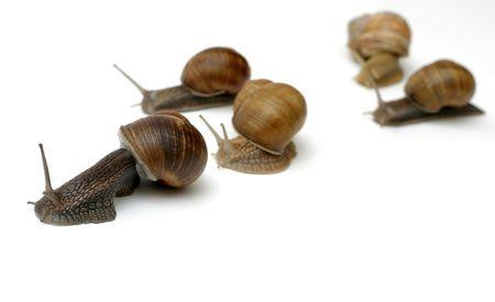 Snails racing toward the finish line (fresh salad) :) photo