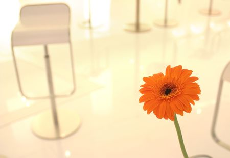 Bright detail from modern urban cafe with focus on gerbera photo