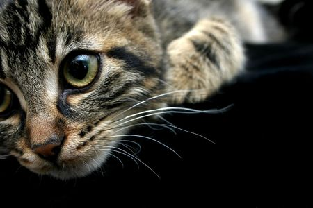 Closeup of cute kittens face, black background photo