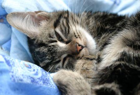 Sleepy kitten on soft bed photo