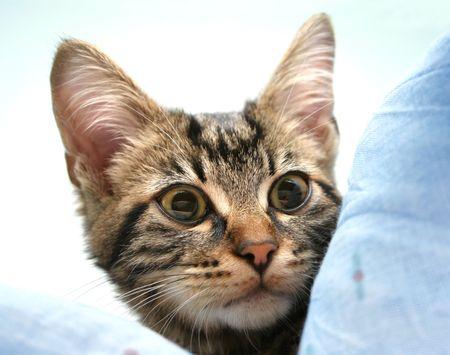 Staring kitten, focus on eyes photo