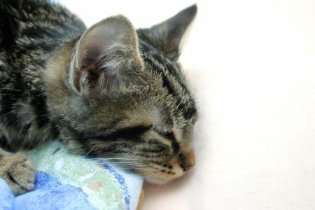 Sleepy kitten closeup, soft filter photo