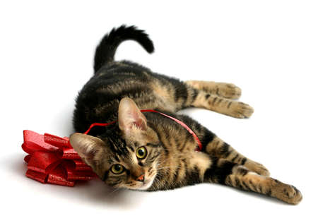 Kitten playing with a red bow photo