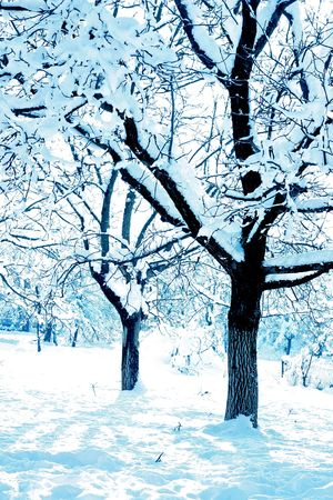 Blue toned trees covered with snow photo