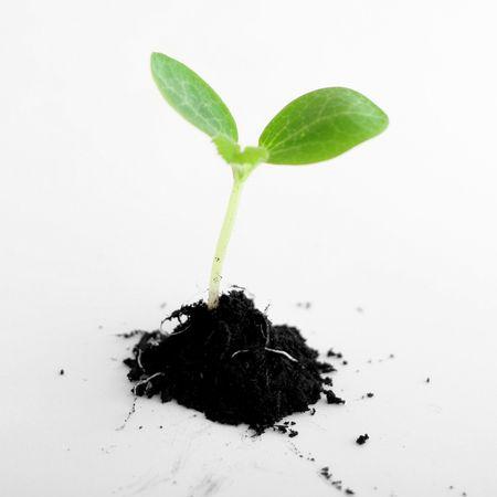 plant in soil photo
