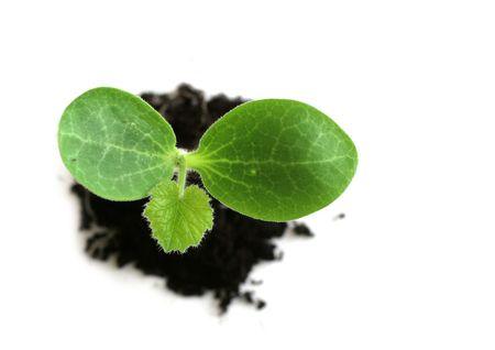plant in soil Stock Photo - 395909