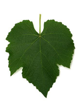 Green grape leaf on white background photo