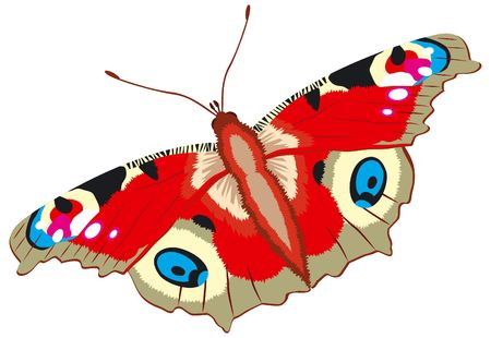 inachis: Peacock butterfly, Inachis io