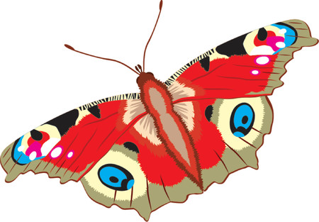 Peacock butterfly,  Inachis io Illustration