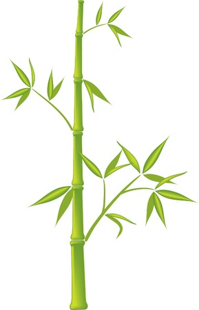 flora vector: Bamboo,  vector illustration (mesh) Illustration
