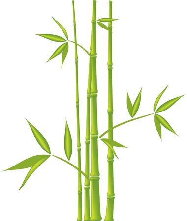 Bamboo,  vector illustration (mesh) Vector