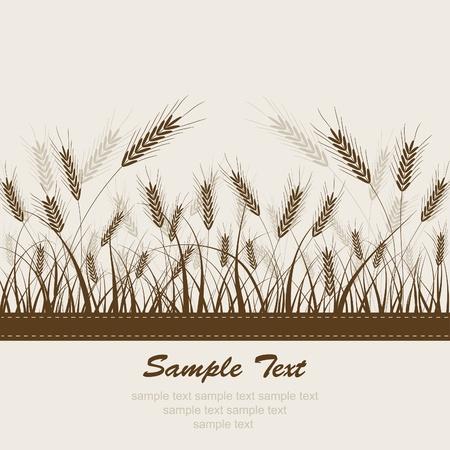 Abstract pšenice pozadí