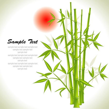 Bamboo background and sun, vector illustration Vector
