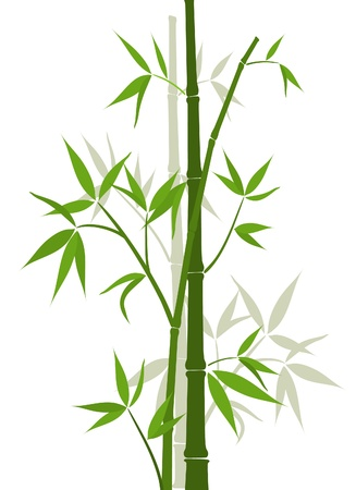bamboo background: Bamboo background, vector illustration