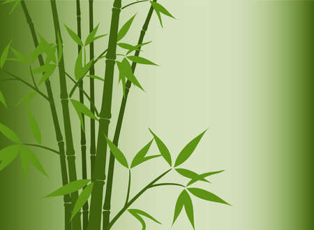 Bamboo background, vector illustration Stock Vector - 16683783