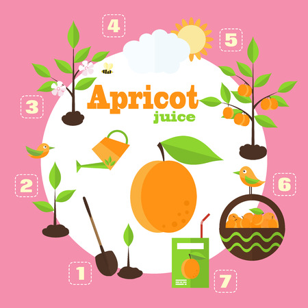apricots: Vector illustration of a garden in the style of the flat. Planting apricot trees, harvesting, processing of apricots in the juice.