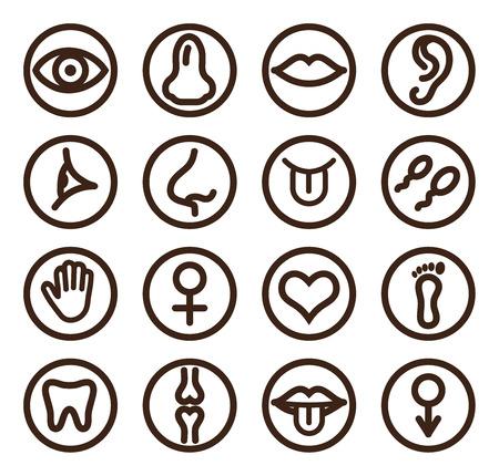 semen: Icona Linea medica impostata per web e mobile. Set comprende-dente, occhio, orecchio, mano, osso, labbra, lingua.