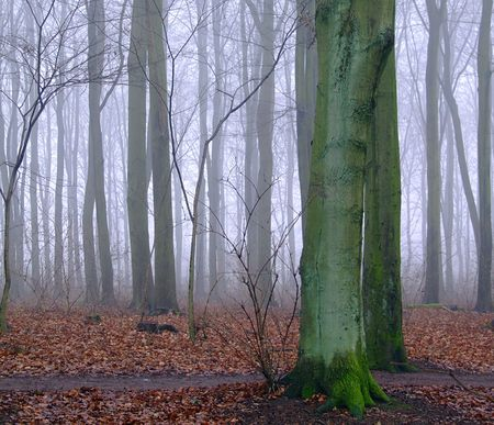 woodland area shrouded in mist photo
