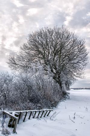 freshly fallen snow: Neve fresca giace a terra in campagna creando un paesaggio invernale.